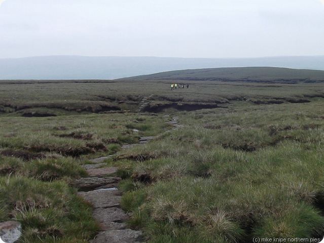 dofe group wanders off into the distance not taking to anybody