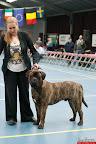 20130511-BMCN-Bullmastiff-Championship-Clubmatch-2001.jpg