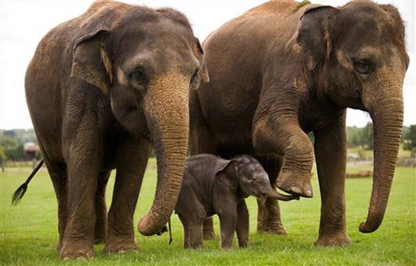 6- Elefantes