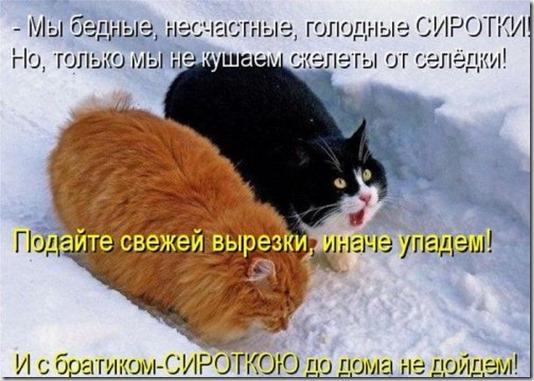 1354868441_kotomoto-19
