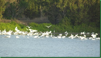 Eco Pond 031