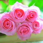 angkorsite_flower_1 (122).jpg