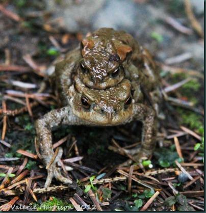 12-toads