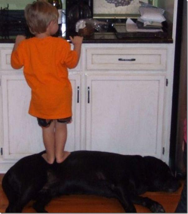 Crianças e animais (1)