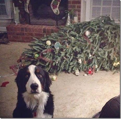 pets-hate-christmas-001