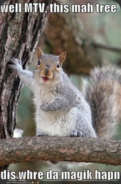 funny-pictures-mtv-cribs-squirrel-tree