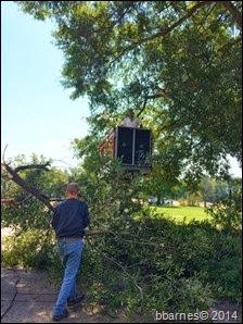 Tree cutting at Darlington 10012014