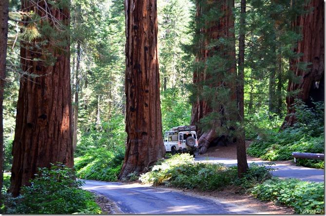 110914 Sequoia NP (12)