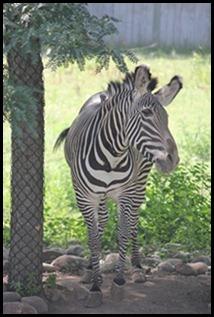 Zoo5 071