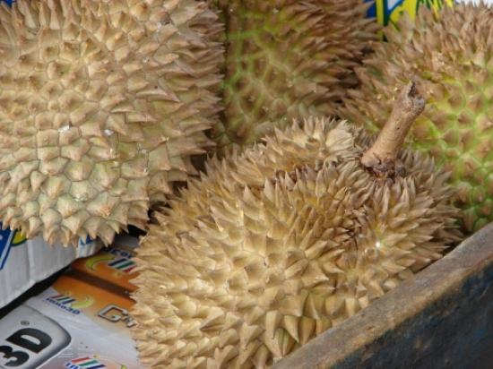 Durian Fruit (Durio spp)