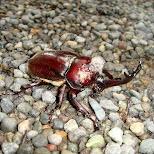 giant beetle at yoyogi park in Tokyo, Tokyo, Japan