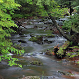 The Little Carp River / Taken just after a nice rain / Porcupine Mountains State Park / Upper Michigan