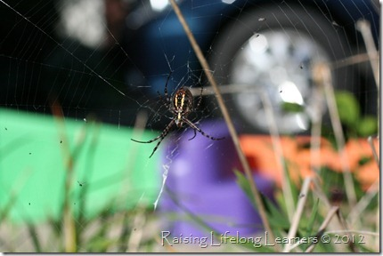 Top of Spider in the Yard