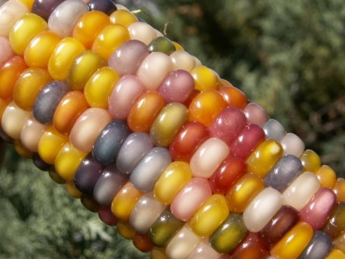 glass gem corn photo