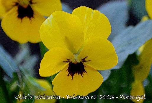 Glória Ishizaka - Primavera 2013 - 7