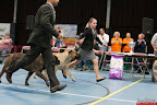 20130510-Bullmastiff-Worldcup-1193.jpg