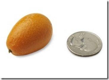 10-kumquat1_thumb