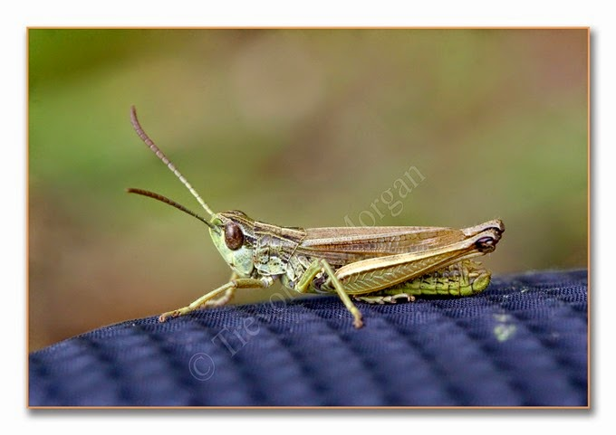 Grasshopper 6 lm