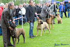 20100513-Bullmastiff-Clubmatch_31179.jpg