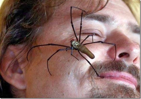 australia-scary-spiders-014