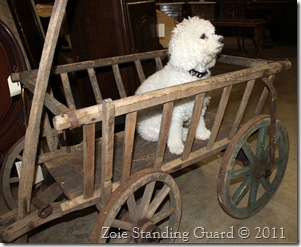 Zoie in the Cart