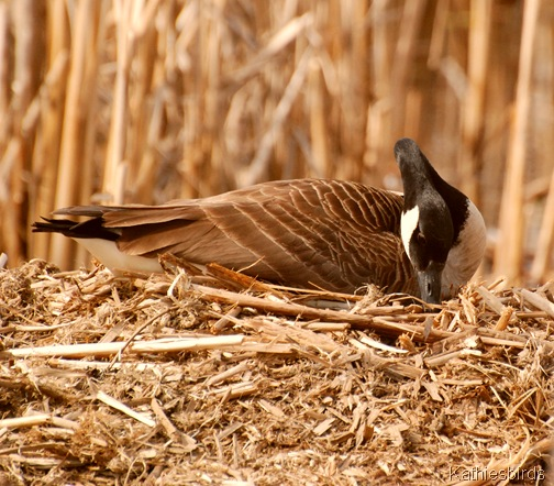 5. nesting-kab
