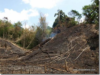 slash_burn_farming_02