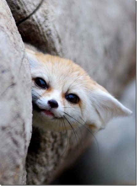 funny-animals-cute-48