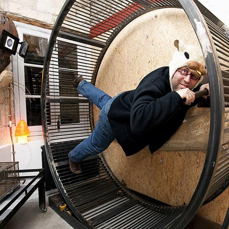 Live Like a Hamster at La Villa Hamster Hotel