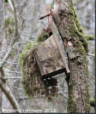 36-nestbox