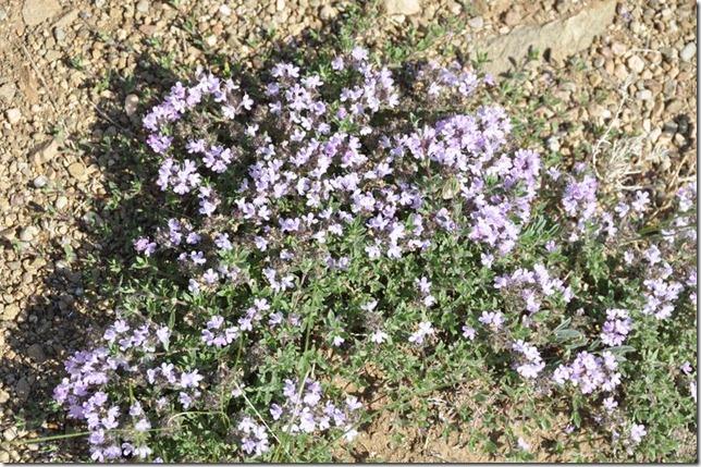 07-16 Vers UB 021 800X fleurs dans le désert