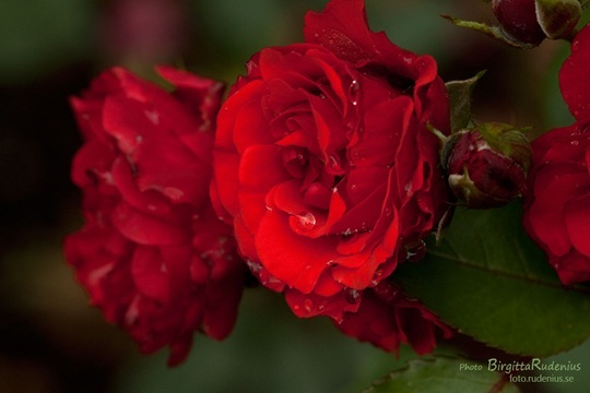 blom_20110722_ros