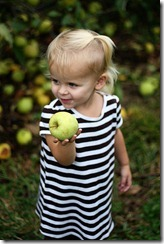 Apple picking Sadie 3