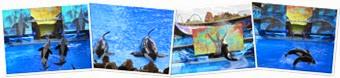 View Seaworld5