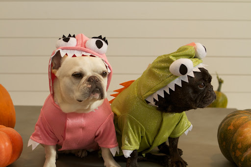 Hey G.K., how do you like our awe-inspiring, trepidation-building, fire-breathing Halloween Dragon Costumes?