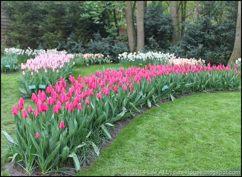 Keukenhof Gardens 27