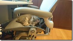 螢幕截圖 2015-03-23 17.41.49