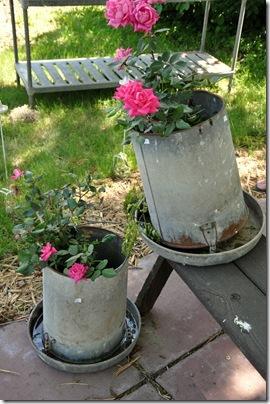 Feeder Roses