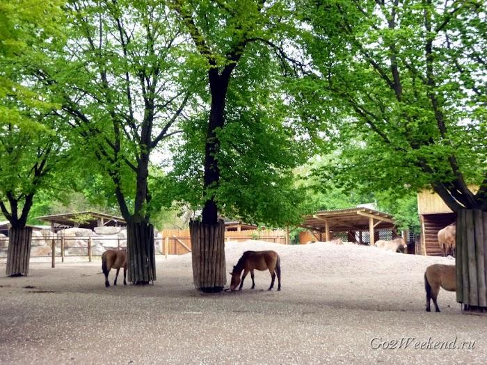 Kiev_Zoo_15.jpg
