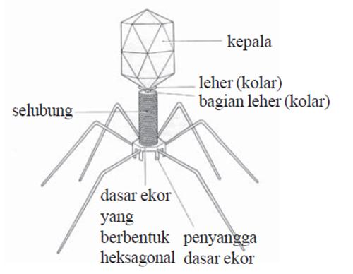 bagian - bagian virus