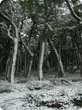 Bosque no caminho ao Mirante Las Torres
