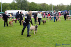 20100513-Bullmastiff-Clubmatch_30890.jpg