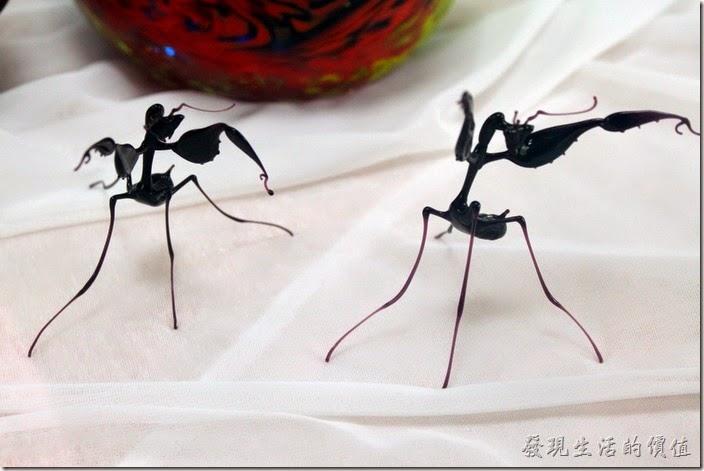 這花瓶好漂亮,但我想看得是其下面的兩隻黑色的螳螂。