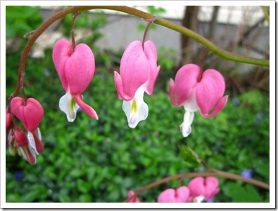 20120515_spring-property_015