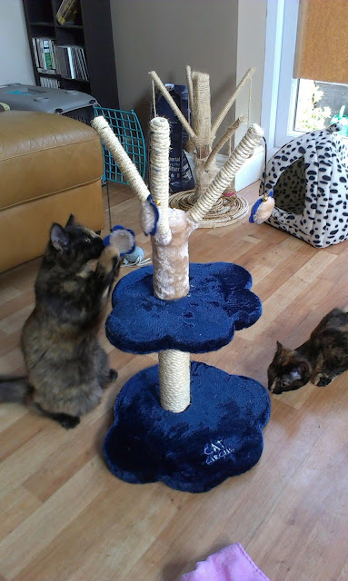 kittens playing with a cat tree