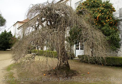 Glória Ishizaka - Jardim Botânico Ajuda - 59