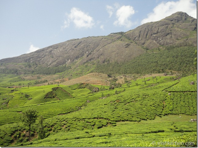 munnar tour 220