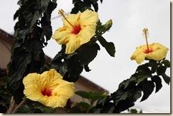trinidad de san joaquines
