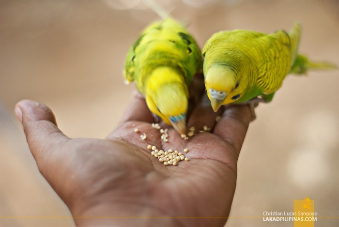 Parakeets on Hand at Subic's Zoobic Safari