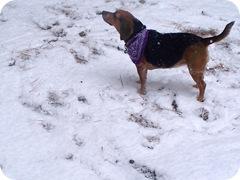 snow, 2012 013